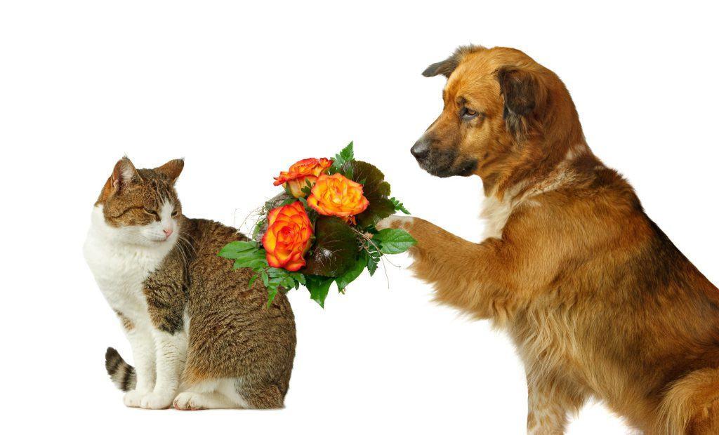 собачка просит прощение у кошки
