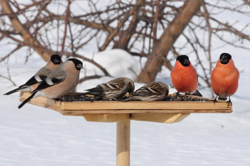птицы, птица