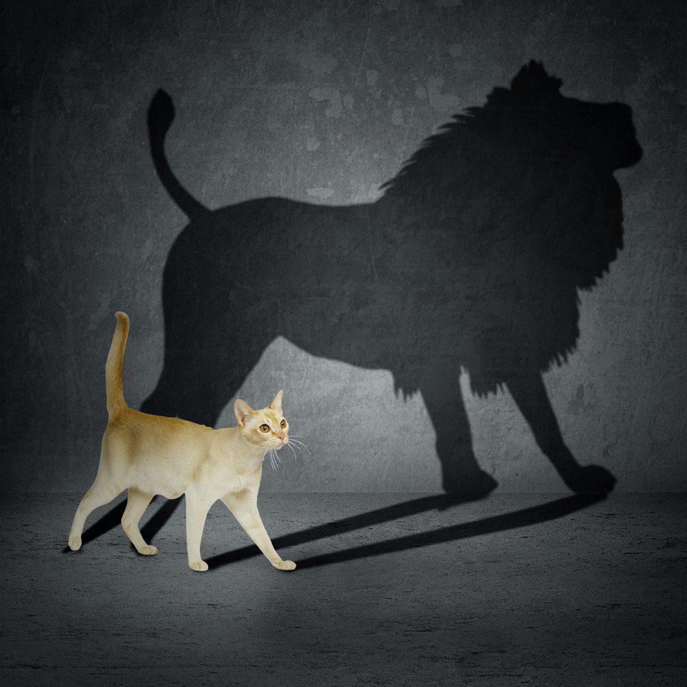 Как приобрести скромность? Практический путеводитель