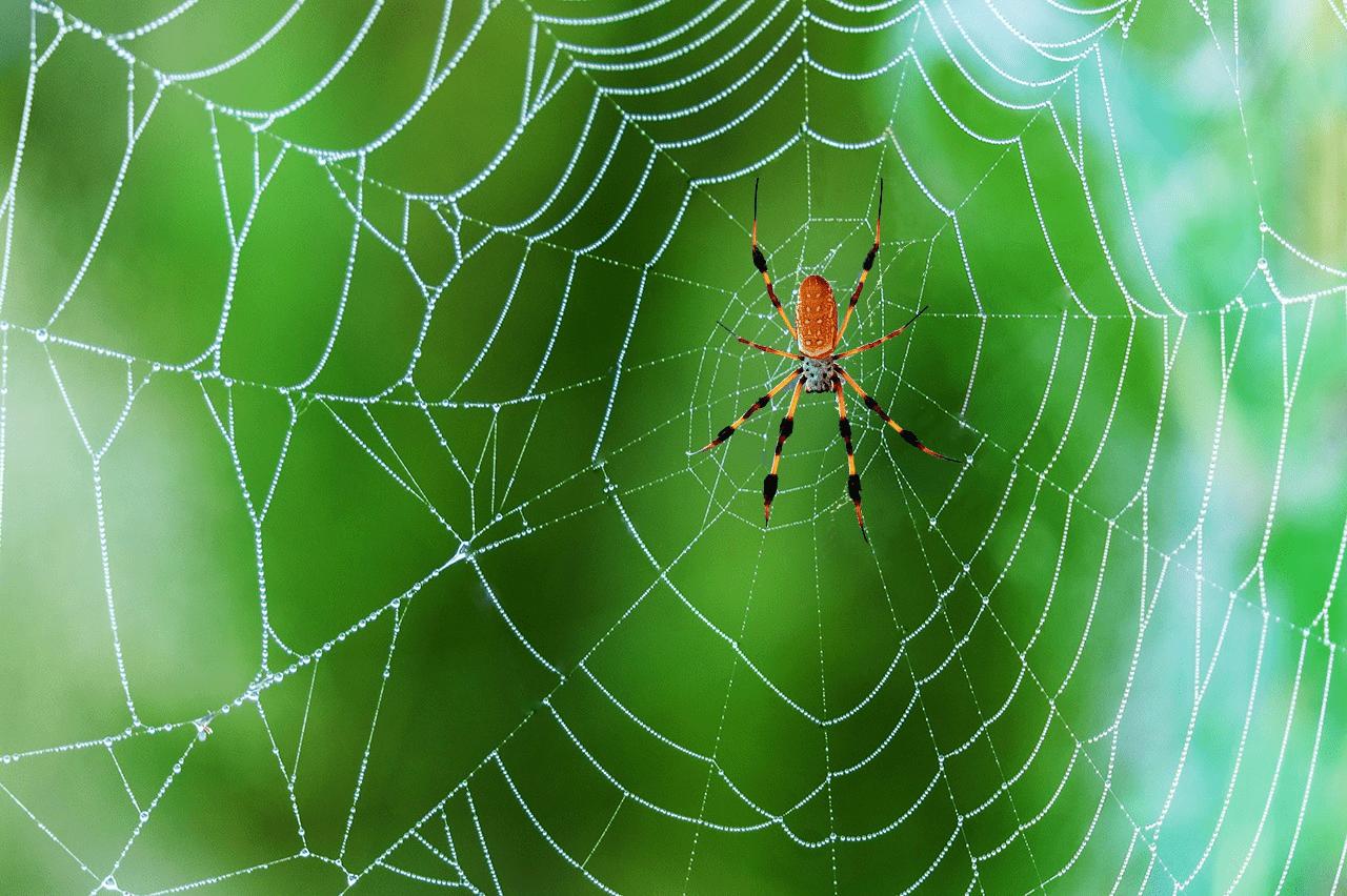 Картинка паучок с паутиной