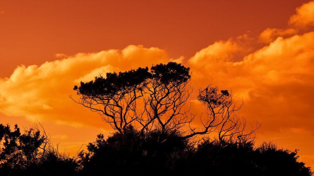 10 деревьев, которые упомянуты в Торе
